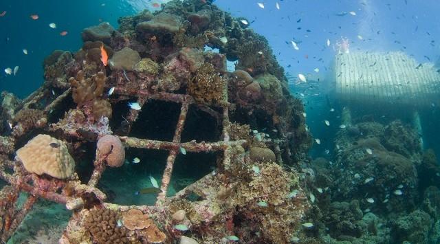 Electric Reef 04 - scubazoo